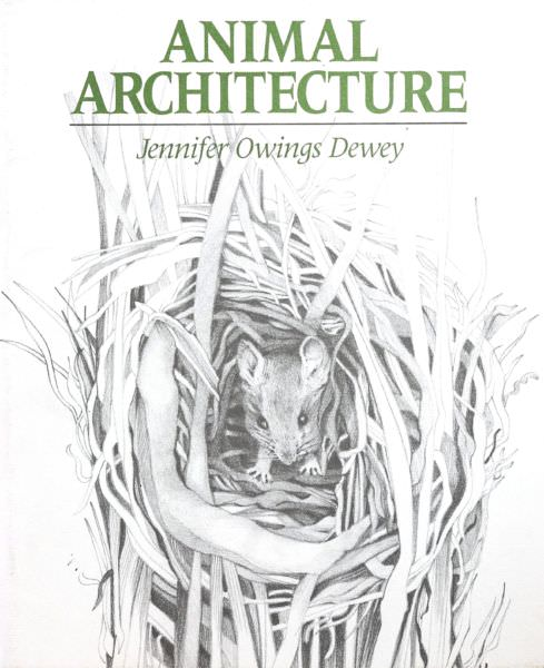 Jennifer Owings Dewey -Architecture