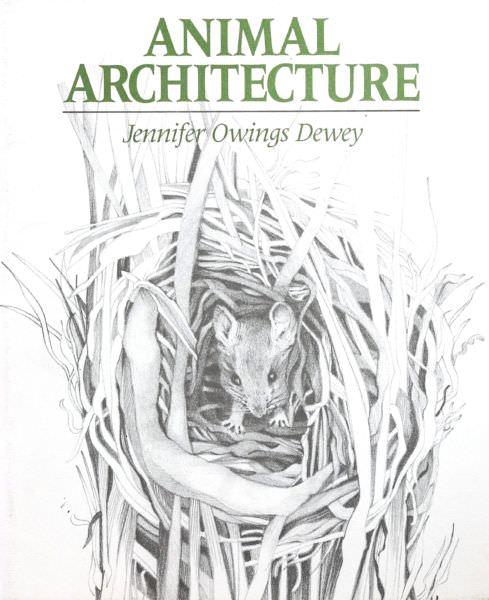 Jennifer Owings Dewey -Architecture